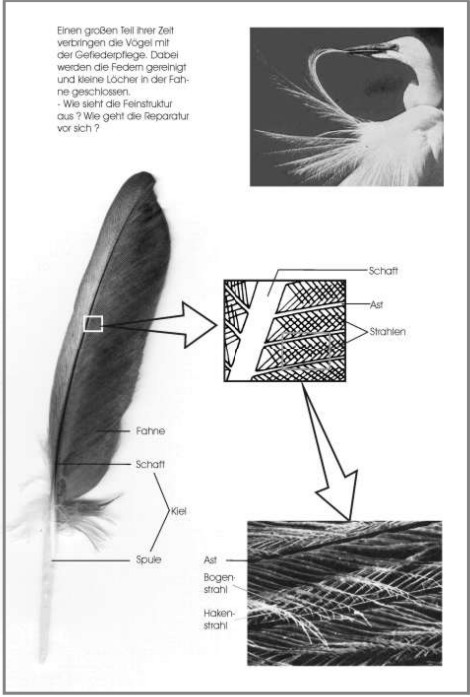 untersuchung einer vogelfeder. Black Bedroom Furniture Sets. Home Design Ideas
